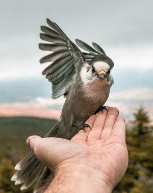 Bird showing trust