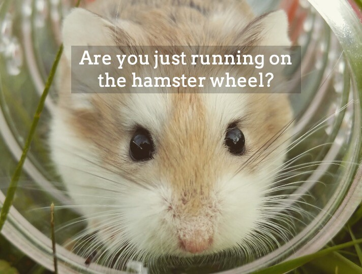 Too busy - hamster wheel 2