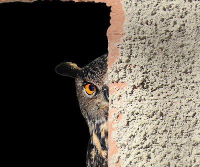 Hidden stakeholders - owl